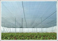 Agriculture Covering Net